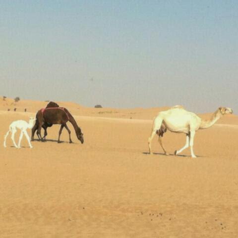 12 ώρες στην έρημο